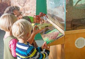 Nationalparkzentrum_Ausstellung_Natur